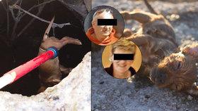 Otřesná kauza týrání zvířat! Štěňata v žumpě prý utopili policisté.