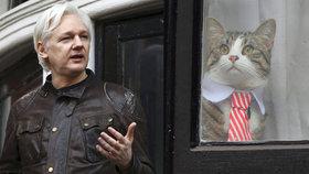 Julian Assange si na ambasádě neuklízí po své kočce a Ekvádoru to vadí.