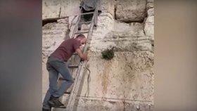 Had schovaný ve Zdi nářků vyvolal mezi Izraelci obavy z konce světa.