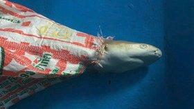 Mládě žraloka se v thajské zátoce Maja zamotalo do plastového pytlíku a zemřelo.