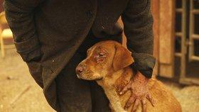 Lidé pomáhají v kalifornských požárech zachraňovat zvířata, která zůstala opomenuta
