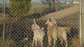 Blesk Tlapky byly u odhalení množírny psů v Německu, kdy chtěl majitel prodávat psy do Česka. Na rozsáhlém pozemku majitele množírny pobíhaly desítky zanedbaných psů.