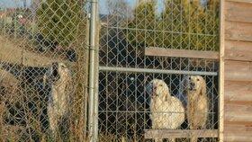 Na rozsáhlém pozemku majitele množírny pobíhaly desítky zanedbaných psů, někteří byli viditelně nemocní, kolem se šířil zápach