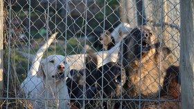Psi v množírnách jsou často v nepřijatelných podmínkách