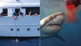 Posádka lodi krmila žraloka.