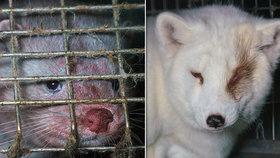 Ochránci zvířat zveřejnili šokující fotografie z finské kožešinové farmy