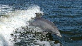 Delfíni jsou velice inteligentní zvířata, která ráda tráví čas v sociálních skupinách