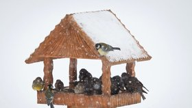 Začíná zima a s tím i sezóna krmení ptáků.