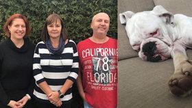 Tři přátelé založili spolek na pomoc buldočkům: Chery bolelo každé pohlazení. Teď už se cítí lépe.