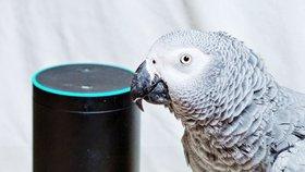 Papoušek si pokoušel přes chytrý reproduktor sám objednávat věci