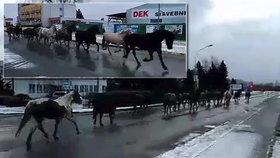 Městem proběhlo stádo koní