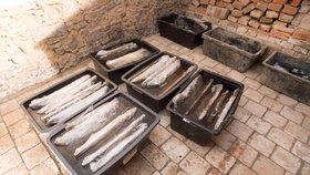 Velké množství nálezů včetně unikátních získali archeologové během záchranného výzkumu pod budoucí dálnicí D35 mezi Opatovicemi nad Labem a Ostrovem.