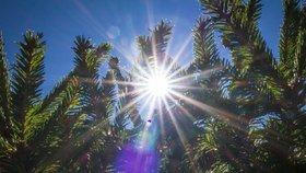 Díky slunečnímu svitu můžeme doplňovat vitamin D, v zimě je ho ale nedostatek. (Ilustrační foto)