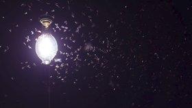 Hmyz trpí kvůli umělému světlu. Pomoci by mělo vypínání pouličních lamp na pár hodin denně