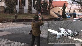 Odstřel holubů