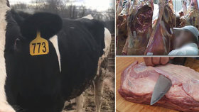 V Polsku se podle místní televize dováželi po nocích na jatka nemocné krávy. Jejich maso se pak dostávalo na pulty. V Česku proto zpřísnily kontroly na dovážené hovězí Polska