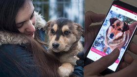 V Litvě vyvinuli mobilní seznamku pro psy z útulku a páníčky.