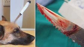 Pes ochránil svého páníčka a napadení přežil.