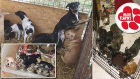 Psi v množírnách žijí v neradostných podmínkách. Nepodporujte ty, kteří s nimi kšeftují.
