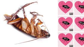 Pojmenujte švába po svém ex, vyzvala zoo v USA