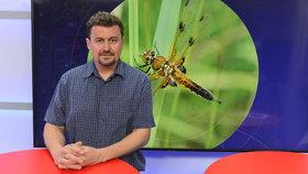 Entomolog Petr Šípek v pořadu Epicentrum popsal, jaký osud čeká hmyz. A co může každý člověk udělat pro jeho záchranu