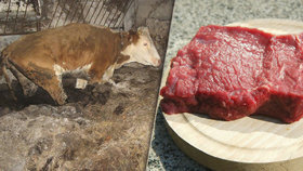 Mrtvolný steak z Polska: Takhle se mohl dostat i na váš talíř!