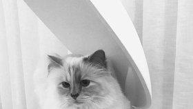 Kočka Karla Lagerfelda Choupette