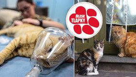 Kastrace toulavých koček: nutná a přehlížená věc, říkají ochránci a obce