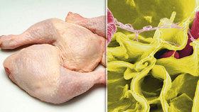 Veterináři objevili víc než tunu kuřecího masa se salmonelou. (ilustrační foto)