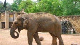 V izolaci trpěla depresemi, jiné slony ale už nebyla schopná přijmout.