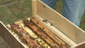 Včely nemusí sloužit jen k opylovávání a produkci medu. Práci mohou najít i u policie.