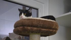 Kauza už je uzavřena a tak kočky, o které se starají v útulku Anidef v Žimu, mohou jít do nových domovů