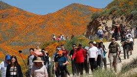 Pole rozkvetlého máku se stalo hitem mezi turisty. Kalifornskému městu ale způsobuje vrásky