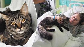 Kocour Bumbác pomůže v liberecké nemocnici.
