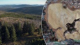 Lesy v ČR strádají, chybí jim přirozené klima a energii jim ubírá sucho. Převážně po letních vedrech jsou pak napadány kůrovcem