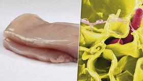 V zásilce více než půl tuny kuřecích řízků z Polska do Česka objevila tuzemská Státní veterinární správa (SVS) bakterii salmonelu.