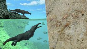 Nečekaný objev v Peru: Čtyřnohá velryba!