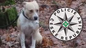 Tyran zanechal psa v lese napospas smrti
