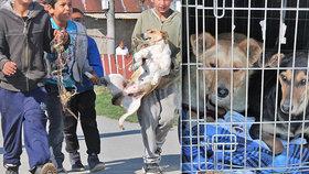 Brutální týrání psů v romské osadě: 9 se jich podařilo zachránit, dalších 20 na záchranu čeká.