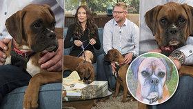 Zoufalému páru zemřel milovaný pes. Za dva miliony si naklonovali další dva