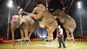 Sloni by neměli podle veterinářů v cirkusu co dělat. Akrobatické kousky, jako jsou i na fotografii jim údajně ničí klouby a svaly