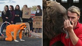 Ať jsou cirkusy bez zvířat, chtějí ochránci. Cirkusy se brání: mají se u nás skvěle
