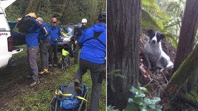 Policisté ve státě Washington objevili hledaného muže díky psovi, který na přítomnost těla svého páníčka upozorňoval štěkáním