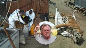 Za tygří masox v Berouskově zooparku až 5 let: Žalobce popsal krvavý byznys