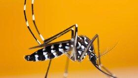 Komáři mohou přenášet encefalitidu.
