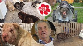 Projekt Tlapky podpořil i prezident Miloš Zeman. Doufá, že se mu návrh zákona o vyšší trestní sazbě za týrání zvířat dostane na stůl co nejdříve