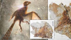 Unikátní objev v Číně: Opeřený dinosaurus s netopýřími křídly!