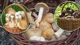 I přesto, že je teprve polovina května, někteří houbaři již hlásí první úlovky.