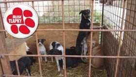 Vláda schválila návrh zákazu množíren a zpřísnění chovu šelem.