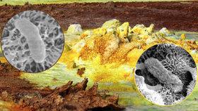 Vědci objevili bakterie v etiopské sopce, kde nemělo být nic schopné přežít. Je tak možné, že život se vyskytuje i na Marsu